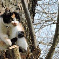 Кошечка на дереве :: Ната Волга