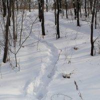 ... в  Снегу  ТРОПИНКА ... :: JT --------      SHULGA  Alexei