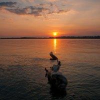 Закат на Волге :: Николай Алехин