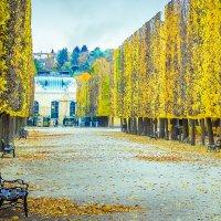 Золотая осень в Венском парке. :: Оксана Бойко