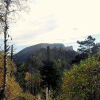 На тропе в горном лесу :: Сергей Анатольевич