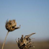 Полевые цветы :: Denis Karpiets
