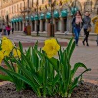 Желтое великолепие................. :: Елена Фролкова