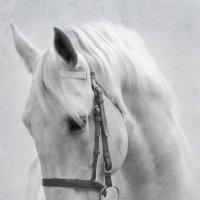 Белая лошадь :: Tatiana Khoroshilova