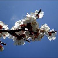 Весна пришла :: Татьяна Пальчикова