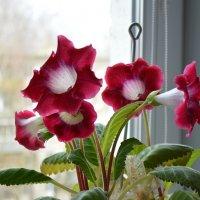 Цветы на окне. :: Sergey Serebrykov