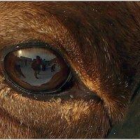 Автопортрет с оленем :: Кай-8 (Ярослав) Забелин
