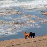 Ледоход :: Ната Волга