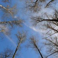 Весеннее небо глядится сквозь ветви мне в очи случайно... :: Валентина Данилова
