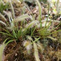 растения :: Виктория Семенова