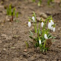 Когда б вы знали, из какого сора растут цветы, не ведая стыда...... :: Елена Фролкова