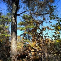 Домик в лесу :: Милла Корн