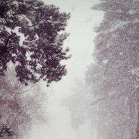зимнее1 :: BioJ .
