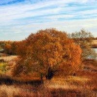 Осень :: Маргарита Волкова