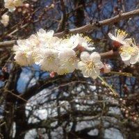 Весна :: Serg