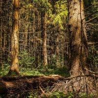 Дикий, дикий лес. :: Stanislav Zanegin