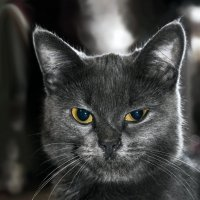 Кошка :: Тамара ***