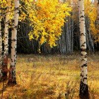 Осенний занавес :: Александр Садовский