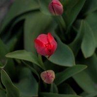 Весна в Таганроге :: Анастасия Антонюк