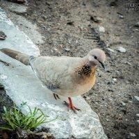 Любопытная птица :: Маргарита Б.