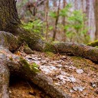 В лесу :: Di Hally