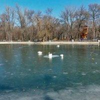 Отдых на льду! :: Наталья