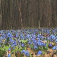 Сказочный лес! :: Наташа Шамаева
