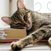 Кот ученый :: п.с.ю