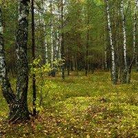 Где то в Белорусских лесах :: Игорь Сикорский