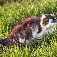 Весенний кот :: Елена Васильева