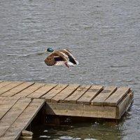 Первая ступень отошла, полёт нормальный ! :: Валерий Судачок