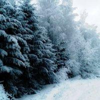зима :: Артём Шкаликов