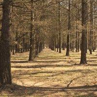 Весенний парк :: Андрей Михайлин
