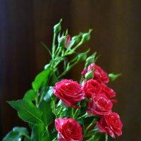 розы :: Михаил Новиков