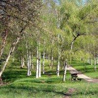 а в весеннем лесу... :: Olga