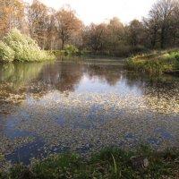 Осенний пруд :: Nikolay Monahov