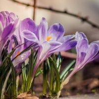 Весна! :: Daria Melnikova
