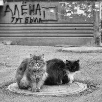 ...мы тоже тут были... :: Ольга Нарышкова
