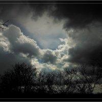 После дождя :: Александр Л......