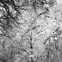 Когти зимы :: Микто (Mikto) Михаил Носков