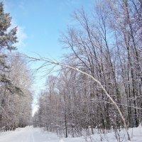 Синева зимнего воздуха :: Лидия (naum.lidiya)