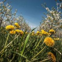 Весенний сад :: Tатьяна Ольшевская