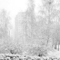 Зима вернулась :: Владимир Новиков