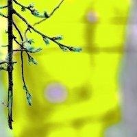 Весна :: Валерий Лазарев