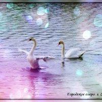 Лебеди... :: Natalisa Sokolets