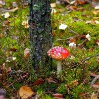 Краса леса :: Игорь Сикорский