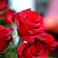 ...и у цветов бывает шарм... :: Юрий Анипов