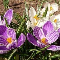 В ожидании весны :: Алексей Соминский