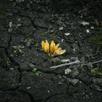 По весне, словно, добрые духи земли... :: Фома Антонов
