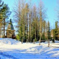 Тёплое солнце уже золотит макушки деревьев.... :: ирина )))